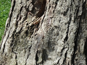 Lizards coming out of tree
